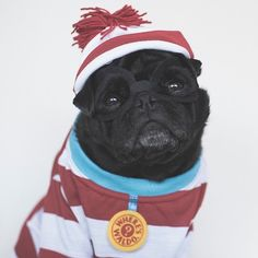 This week's pug photo challenge is all about book week. So get dressed up as…