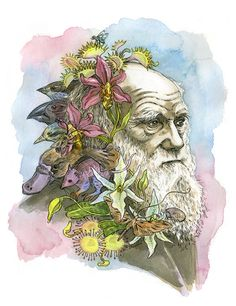 Charles Darwin II portrait illustration print in by JBarnum, $5.00