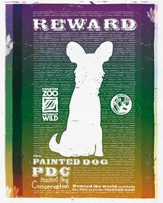 UHGAP & Houston Zoo, Painted Dog - Isaac Ayala