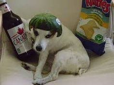 Image result for funny jack russell