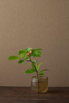 一日一花 川瀬敏郎  2012年6月19日(火)  桜桃忌。太宰治の命日です。  花=桜桃(オウトウ)  器=ローマングラス碗(ローマ時代)