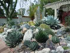lovely cactus garden | n.b. - I think it would be good to use green rock outside the kitchen window | n.b. - SIDE YARD favorite xeric ideas