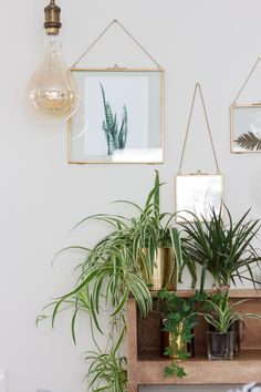 How to use picture frames in interior Design? Bohemian Pictures, Zen Pictures, Interior Styling, Interior Design, Zen Style, Plant Design, House Rooms, Home Decor Inspiration, Home And Living