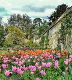 """Tulip Time"" - Botanic Garden Oxford  #photobydperry #loves_united_europe ##wp #Italia_super_pics #ig_italy #ig_rome #pocket_family #spgitaly #igerslazio #loves_united_italia #ilikeitaly #italia_dev #pocket_Italy #gallery_of_all #total_Italy #loves_united_team #yallerslazio  #italy_hidden_gem #igw_italy #fdnf #lazio #ig_lazio_  #ig_lazio #nikontoday #unlimitedrome #my_rome #thehub_italia #gallery_of_all #super_roma_channel #oxford"