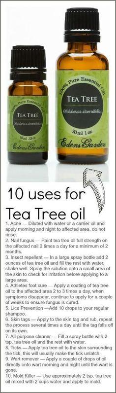 Tea Tree by kathy.kempiak