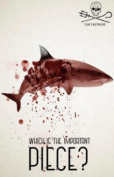 Sea Shepherd: Ocean's wings, 2 Advertising School: Universidad Latina de Costa Rica, Costa Rica