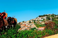 Madeira - Portugali - #Finnmatkat