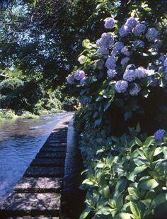 源兵衛川水辺の散歩道