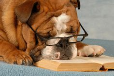 "The ""Tried, But Couldn't Stay Awake"" Reader 