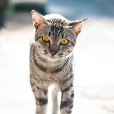 kucing garong [wild cat] by Syahrul Ramadan, via 500px