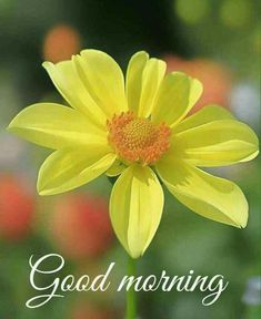 Very Good Morning Images, Good Morning Beautiful Flowers, Good Morning Images Flowers, Good Morning Image Quotes, Good Morning Cards, Good Morning Picture, Good Morning Funny, Good Morning Greetings, Amazing Flowers