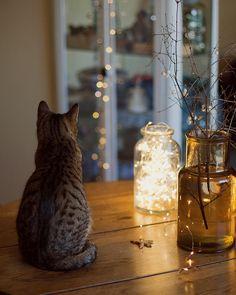 #allthebeautifulthings #christmas #waitingforchristmas #magicchistmas #cat #catlover #lights #slowli...