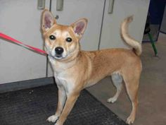 www.PetHarbor.com pet:ADMS.A103474
