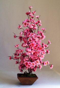 A floração das cerejeiras anuncia o início da primavera no Japão. Entre março e maio o país é tomado por diferentes tons de branco e rosa que transformam a paisagem de forma deslumbrante. As árvores ficam floridas durante uma semana aproximadamente, e suas flores simbolizam a beleza e a fragilidade da natureza e da própria vida