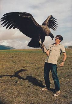 Cinereous Vulture (Aegypius monachus), the largest true bird of prey in the world