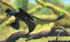 """A tiny dinosaur about the size of a house cat was recently discovered in South Korea. The dinosaur's fossilized remains span about 11 inches, but scientists told Korea JoongAng Daily that it was likely about 20 inches long when it was alive. """"Based on the findings so far, we assume that the dinosaur is something […]"""