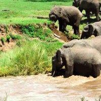 Elephant Calf River Rescue