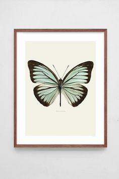 Göran Liljeberg - Butterfly prints Pareronia Valeria Lutescens large-1