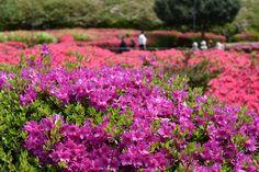 小室山公園 2016.4