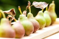 Nett aneinandergereiht unsere Birnen aus dem #Birnengarten #Ribbeck #Havelwasser