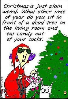 Image result for aunty acid christmas