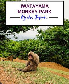 Feed the monkeys at the Iwatayama Monkey Park (Kyoto, Japan) | Wanderlustyle.com