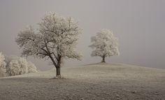 Raureif, Winter, Geäst, Stimmung, Trüb, Neblig, Nebel