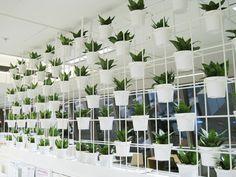 09_Sansevieria-in-Vertical-Gardens