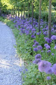 What You Can Do To Improve Your Landscaping using Garden Arbor Everyone that owns a home wants to take pride in it. Purple Garden, Shade Garden, Purple Plants, Garden Arbor, Garden Paths, Purple Perennials, Garden Borders, Dream Garden, Big Garden