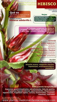 Infografía. Resumen de las características generales de la planta de Hibisco. Propiedades, beneficios y usos medicinales más comunes del Hibisco.