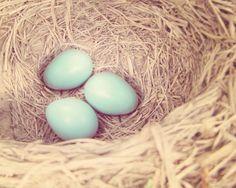 Nursery Photography, robin's egg photography, robin's nest robin's eggs, tiffany blue aqua kitchen wall art, shabby chic mint robin egg 8x1. $30.00, via Etsy.