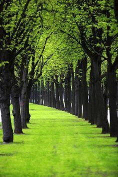 Un paseo verde