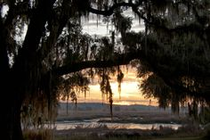 The Combahee River, the heart of the Ace Basin, in Colleton County, SC. My favorite place on this earth :)