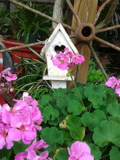 Pink Geranium in country garden setting with white birdhouse and old wheel...