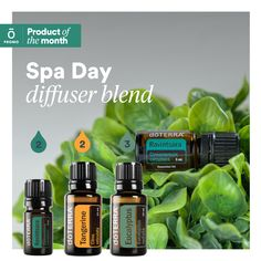 Have you tried Ravintsara Essential Oil? Similar to Eucalyptus, but milder, a truly refreshing blend that refreshes the home! Doterra Oil Diffuser, Essential Oil Diffuser Blends, Doterra Oils, Doterra Blends, Essential Oil Companies, Essential Oils 101, Ravintsara, Diffuser Recipes, Young Living