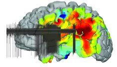 دوره آموزشی مبانی علوم اعصاب محاسباتی (دوره دوم) - نوروسافاری   دانش مغز و علوم اعصاب Neuroscience, Neurology