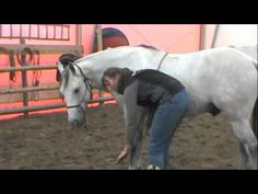 How to teach a horse to lay down naturally (without ropes) ~ Tutorial! - YouTube