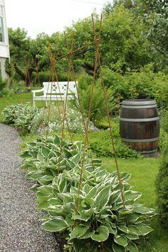 Pea Trellis, Garden Trellis, Garden Projects, Diy Projects, My Secret Garden, Garden Ornaments, Trees To Plant, Garden Landscaping, Gardening Tips
