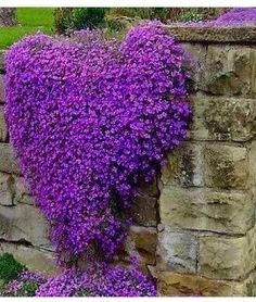 Cheap purple flowers seeds, Buy Quality perennial ground cover directly from China rock cress Suppliers: Cress,Aubrieta Cascade Purple FLOWER SEEDS, Deer Resistant Superb perennial ground cover,flower seeds for home garden Beautiful Gardens, Beautiful Flowers, Beautiful Gorgeous, Exotic Flowers, Naturally Beautiful, Simply Beautiful, Beautiful Things, Creeping Phlox, Creeping Thyme