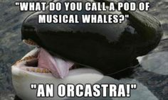 Funny pictures about Whale Puns. Oh, and cool pics about Whale Puns. Also, Whale Puns photos. Music Jokes, Music Humor, Funny Music, Corny Jokes, Funny Puns, Funny Stuff, Funny Things, Awesome Things, Random Things