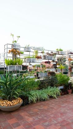 crush: a lesson on how to choose the right plants, decor and colors for your garden Anaheeta's beautiful and super organized terrace garden with vertical planters.Anaheeta's beautiful and super organized terrace garden with vertical planters. Terraced Landscaping, Terraced Backyard, Backyard Landscaping, Apartment Balcony Garden, Small Balcony Garden, Roof Garden Plants, Planter Garden, Balcony Gardening, Gardening Zones