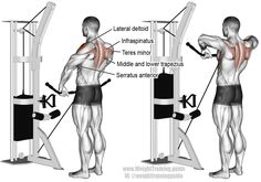Cable wide grip upright row. A compound shoulder and arm exercise. Target muscle: Lateral Deltoid. Synergistic muscles: Anterior Deltoid, Supraspinatus, Brachialis, Brachioradialis, Biceps Brachii, Middle and Lower Trapezius, Serratus Anterior, Infraspinatus, and Teres Minor. Note: The upright row can be harmful to your shoulders. Visit site for safety instructions.