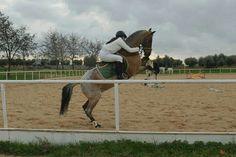 Gladiateur. #Horsetime