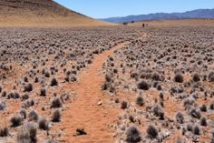 Désert du Namib. Namibie.