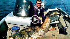 Жесть Рыбалка на сома Вот это рыбалка Best Fishing Сом попался на удочку...
