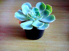 My pretty little plant!