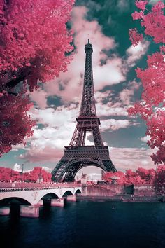 Eiffel Tower & pink flowers