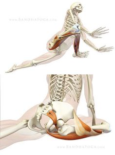(KAPOTASANA) Pigeon Yoga Pose Benefits Protecting the knee in Pigeon Pose: Top illustrates engaging the muscles on the outside of the knee. Bottom shows the piriformis muscle stretching in Pigeon Pose. Muscle Anatomy, Body Anatomy, Hip Muscles Anatomy, Yin Yoga, Yoga Meditation, Bikram Yoga, Fitness Workouts, Yoga Fitness, Fitness Tips