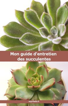 Succulent plant: guide to caring for succulents and succulents indoors – Esprit Laïta - Garden Grass Texture Seamless, Grass Drawing, Grass Alternative, Grass Edging, Garden Edging, Grass Pattern, Sempervivum, Grass Background, Gardening
