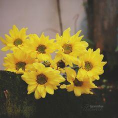 Still Life Art, Veronica, Flower Art, Art Photography, Bloom, Instagram Posts, Flowers, Plants, Painting